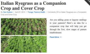 Ryegrass as companion and cover crop