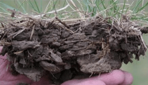Compaction indicated by a platy soil surface structure that decreases production and increases runoff.