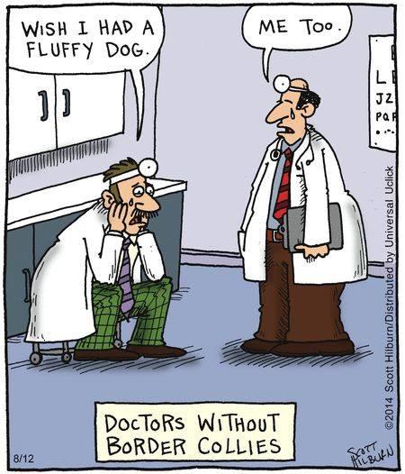 DoctorsWithoutBorderCollies