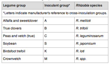 Here's the Rhizobia for your legume.