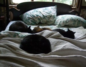 Cats on an unmade bed....what's your opinion on this?