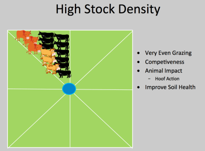 High Stock Density