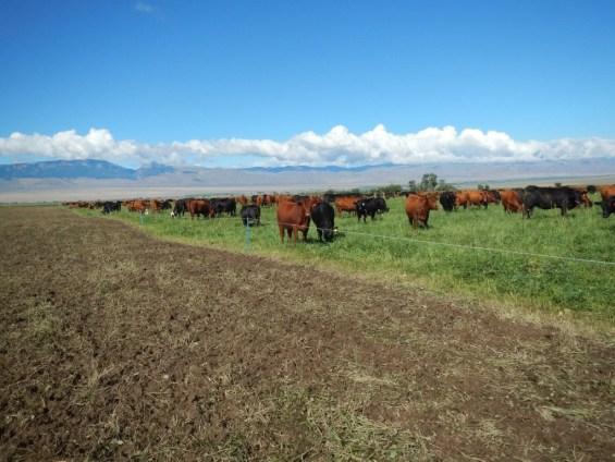 Dry Wet Mob Grazed Pasture