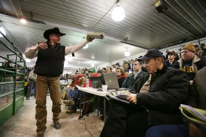 bidding on cattle