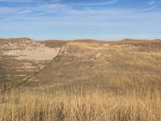 Sand Hills blow out healing 1