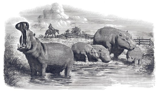 Hippo ranch illustration by Mark Summers.
