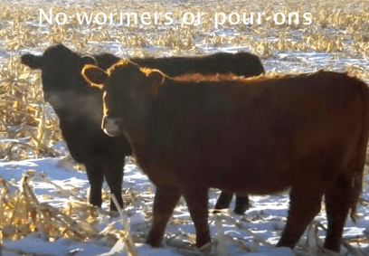 No Wormers or Pour Ons Sand Ranch