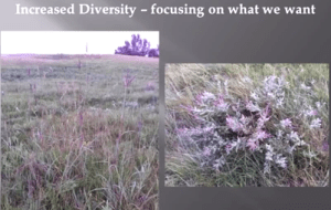 """The plant on the right is called """"lead plant."""" It is a very palatable plant, and so isn't found on overgrazed pastures. It compliments little and big blue stem, and doesn't compete with them for water because it is deep rooted."""