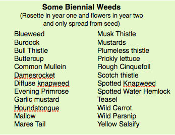 biennial-weeds-list