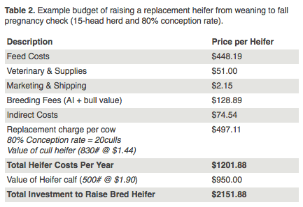 replacement-heifer-costs