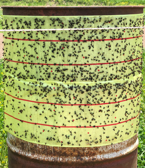 Farm Hack Fly Traps – On Pasture