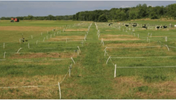 How Short and How Often Should You Graze Your Grass?