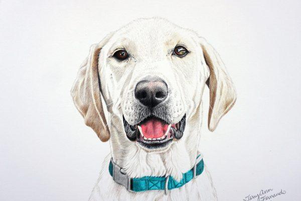 Marley the Labrador retriever mix