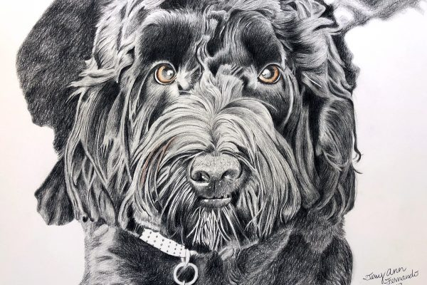Max the Portuguese water dog