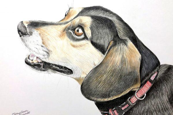 Henry the Beagle Mix