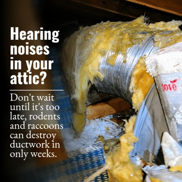 Sounds In The Attic On Point Wildlife Removal