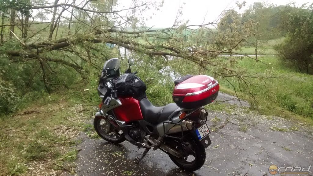 Frissen kidőlt fa Zalaegerszeg után