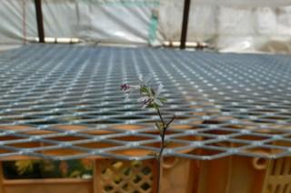 松風園〜二和園へ 2013・06・29