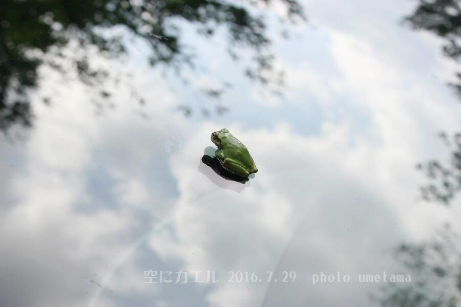 青空に浮くカエル900