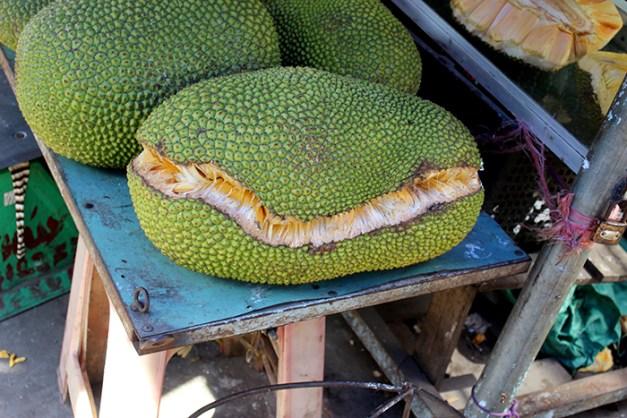 Le fruit du Jaquier