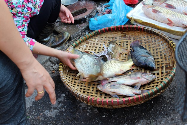 les poissons étaient encore vivants quand ils ont été vendus!