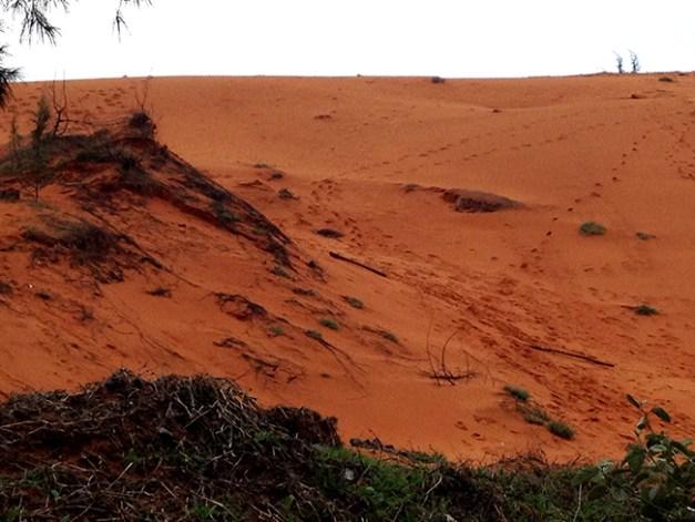 Les dunes de sable rouge