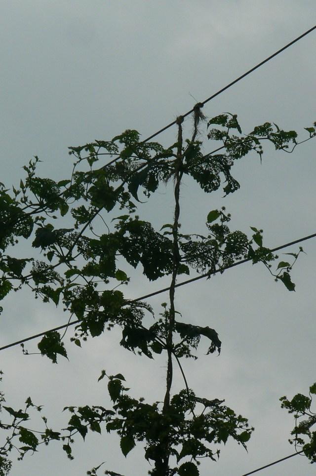 Feeding top wire