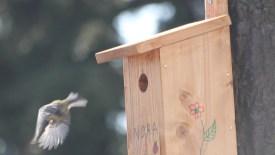 Gratis nestkastje afhalen: bied een thuis voor mezen