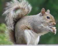 Solar-panels-and-squirrels