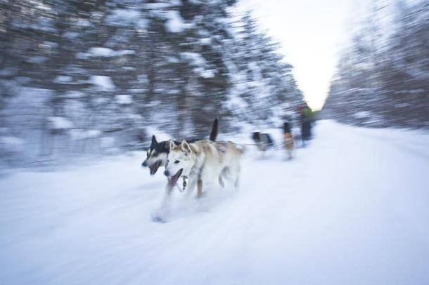 Dogsledding in Ontario