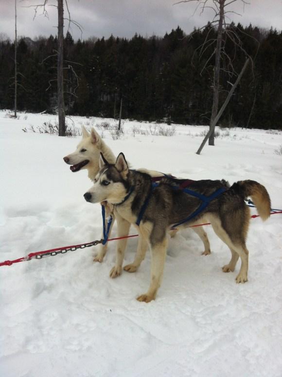 Winterdance Dogsledding
