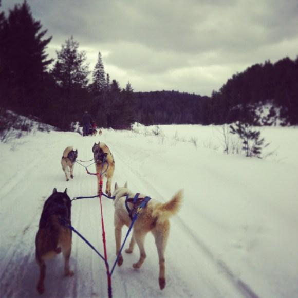 Winterdance Dogsled