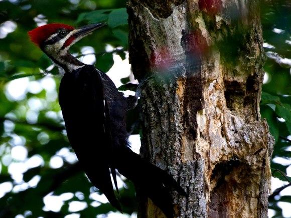 Birding5_East