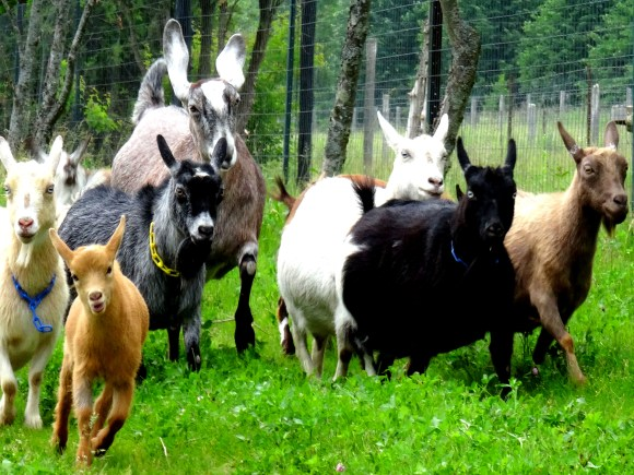 FarmStays2_HauteGoat