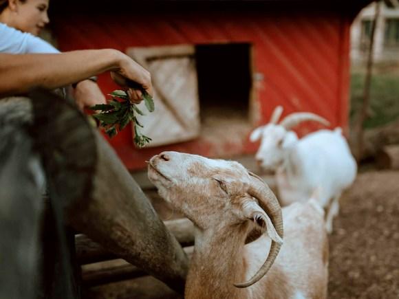 FarmStaysNEW_SouthPond