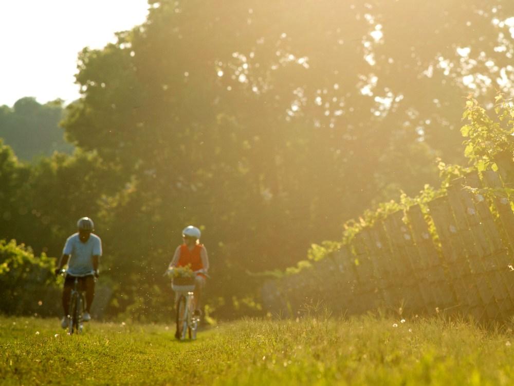 A man and woman cycling alongside a vineyard