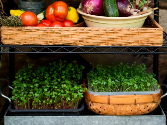 Fresh vegetables and herbs on a shelf