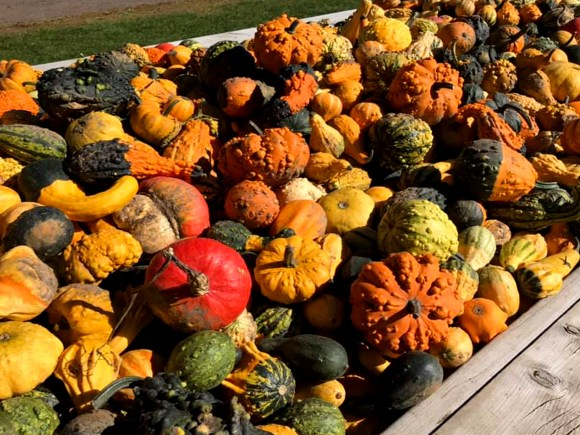 pile of pumpkins of all sizes and colours