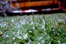 Iced over grass after a winter storm.
