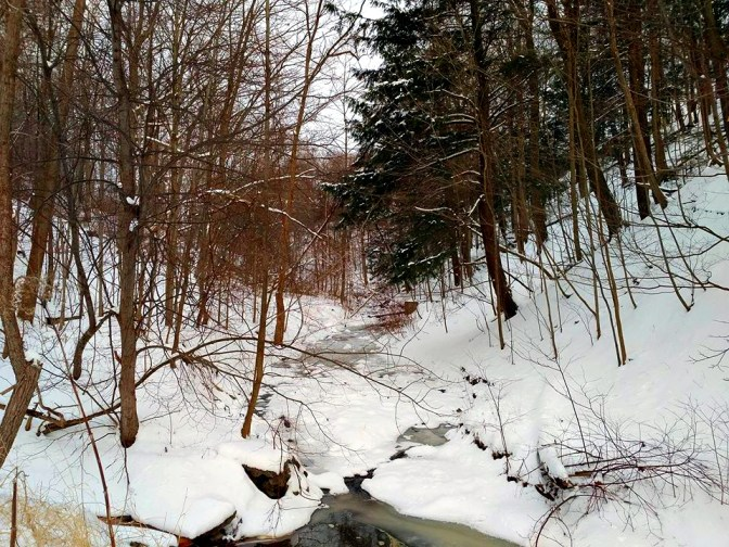 Ferris Tributary of the Taylor Creek.