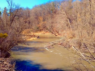 Many fallen trees line the riverbed.
