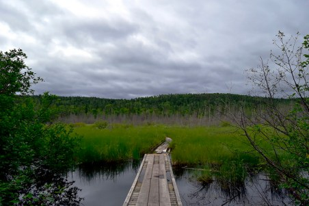 In the beginning of the trail you traverse through a wetland.