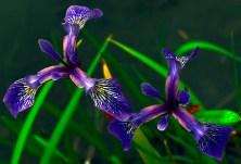 Wonderful flowers.