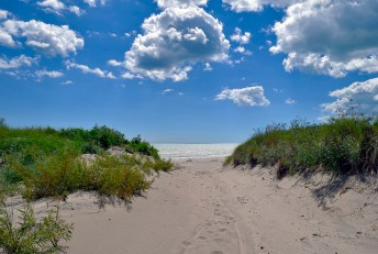 Grass covered sand dunes.
