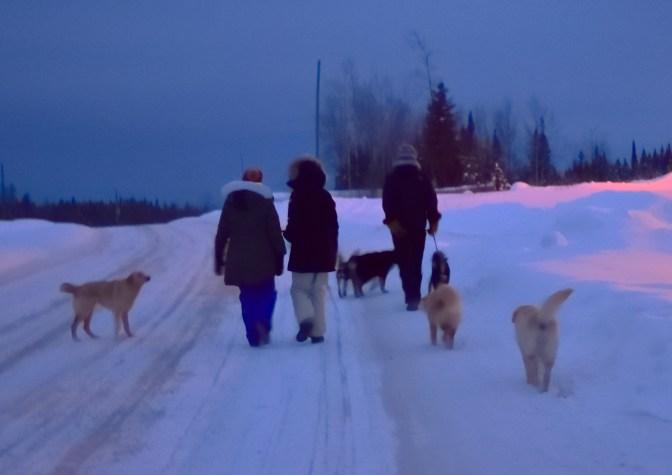 Random rez dogs that follow us on our walks.