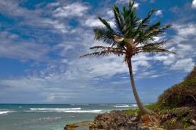 Just a palm tree.