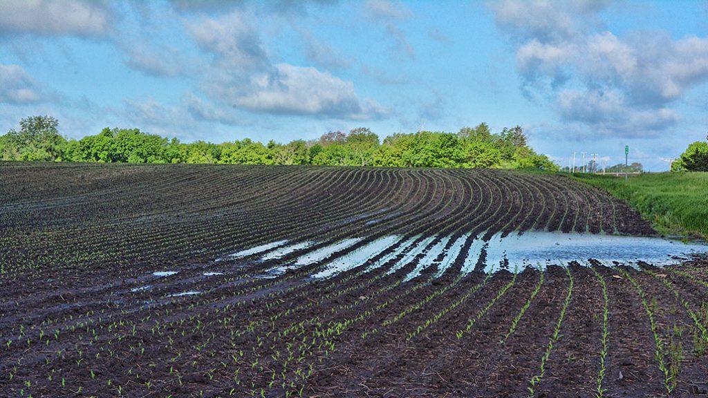 water management ontario grain farmer