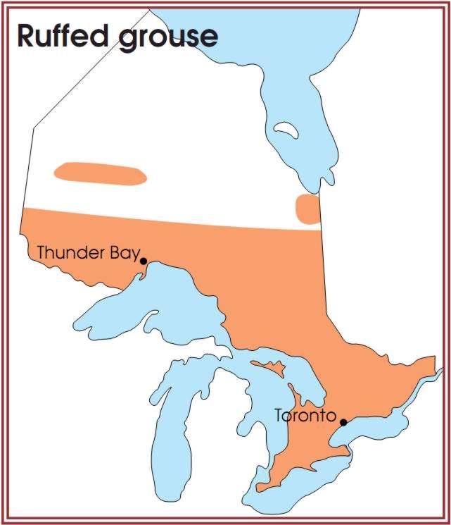 Ruffed Grouse Ontario Food