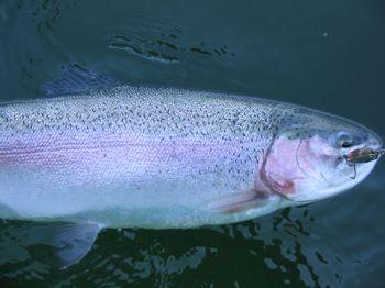 Ontario Trout Fishing