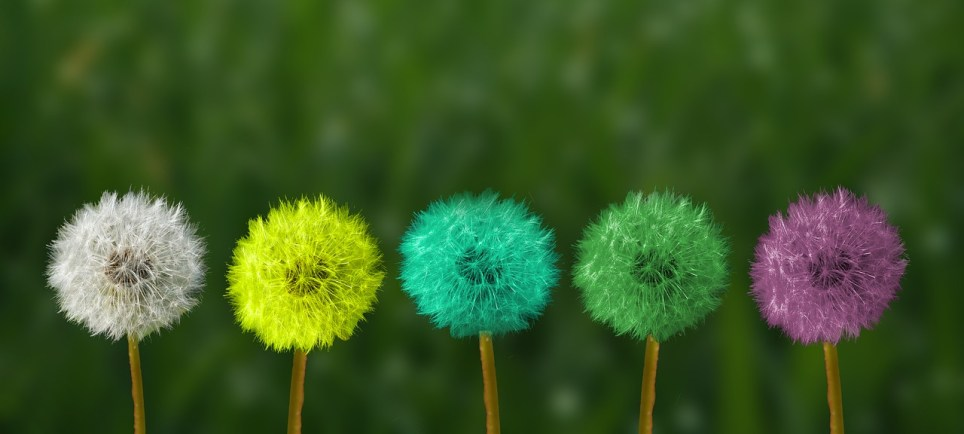 Vijf kleurrijke paardebloemen, wit, geel, blauw, groen en paars.